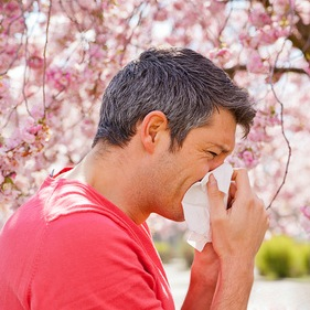 Allergies, Hay Fever and Allicin